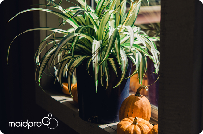 Pet-friendly Plants To Keep Your Home Healthy - MaidPro